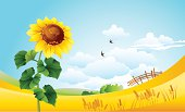Illustration on a theme a summer. Flowering sunflower on a background