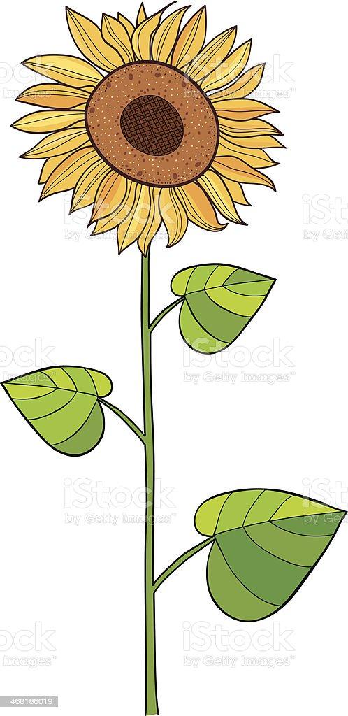 Sunflower royalty-free stock vector art