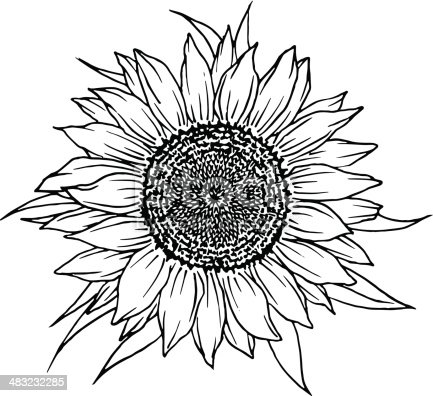 Sunflower Stock Vector Art & More Images of Arts Culture ...