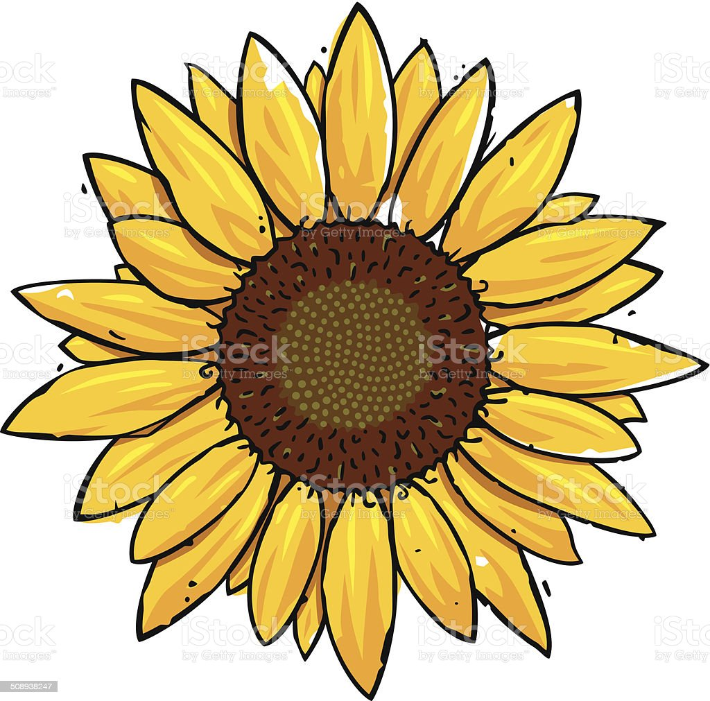 Sunflower Stock Vector Art & More Images of Autumn ...