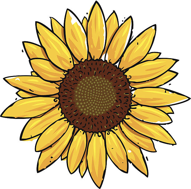 Sunflower Illustrations, Royalty-Free Vector Graphics ...