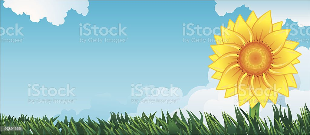Sunflower royalty-free sunflower stock vector art & more images of beauty in nature