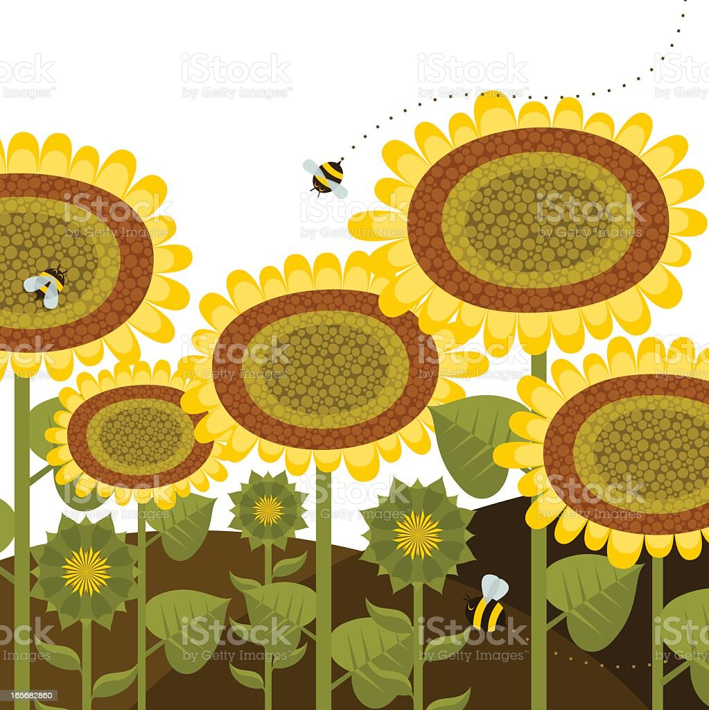Sunflowers bees summer spring nature flower gardening illustration vector royalty-free sunflowers bees summer spring nature flower gardening illustration vector stock vector art & more images of agriculture
