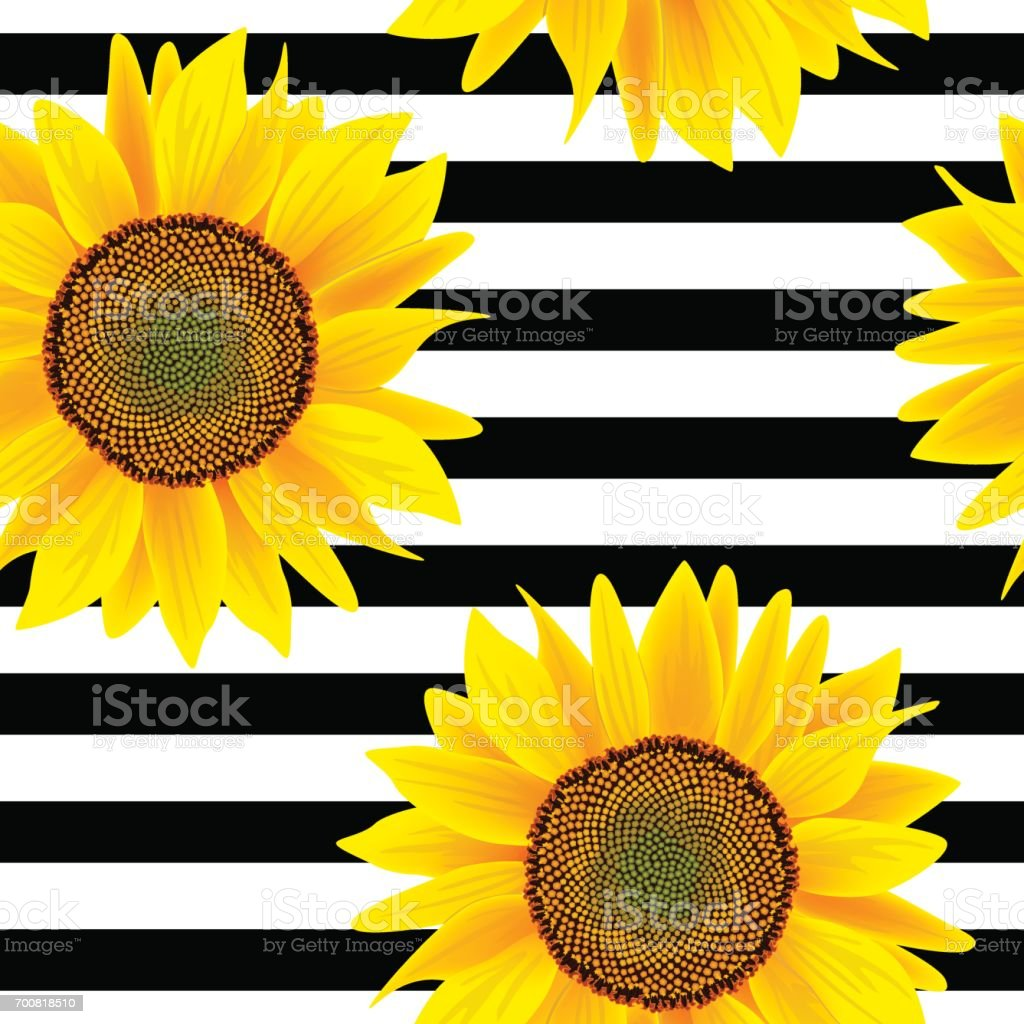 sunflowers on a striped black and white seamless vector pattern vector id700818510