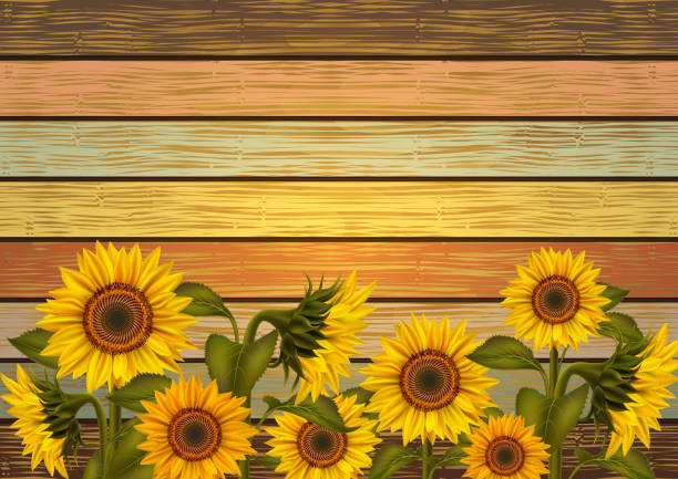 sunflowers on wooden background - sunflower stock illustrations