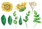 Sunflowers vector clipart. Rustic flowers set