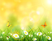 Summer background, sunny day with butterflies flying above the grass with ladybugs and flowers, illustration.