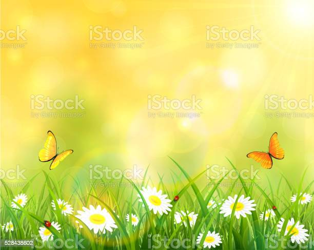Sunny background with grass and flowers vector id528438602?b=1&k=6&m=528438602&s=612x612&h=to9ypxgrxzbsjcgshmg09tmyhadmina iwsgmpwfjjw=