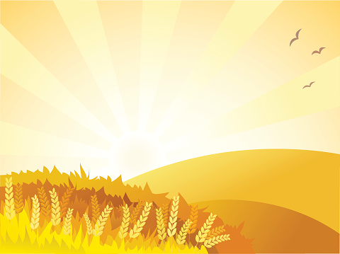 Sunny golden landscape