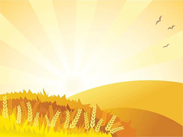 golden landschaft sonnigen - herbstgemüseanbau stock-grafiken, -clipart, -cartoons und -symbole
