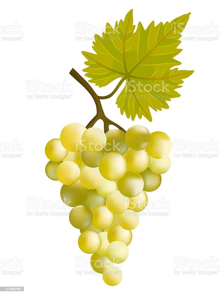 Sunny grape. vector art illustration