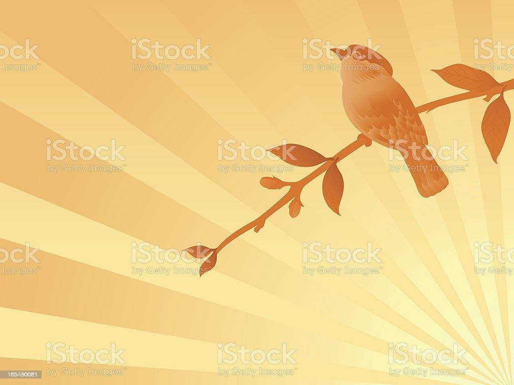 Sunrise bird royalty-free stock vector art