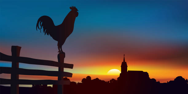 Sunrise on an authentic country landscape with a rooster perched in the foreground. vector art illustration