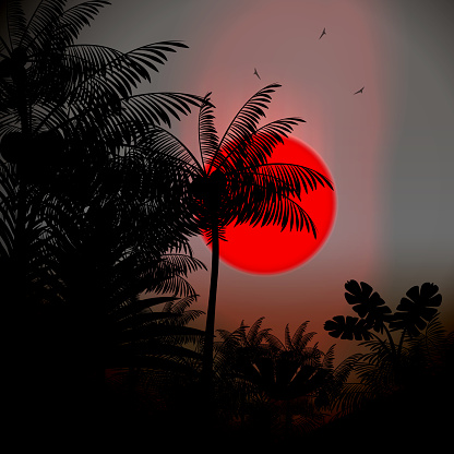 Sunset background,with palm tree silhouettes