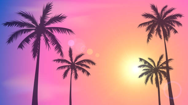 Sunset sky and palm trees Background with sunset sky and palm trees, tropical resort, Miami miami stock illustrations