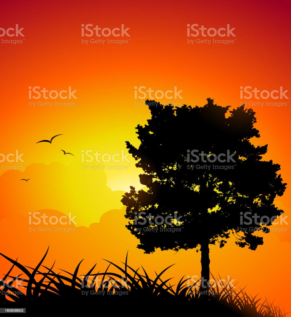 Sunset tree vector art illustration