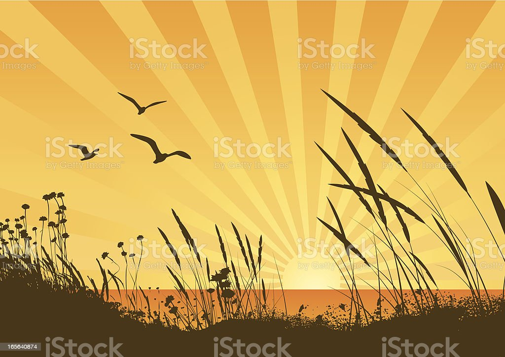 Sunset vector art illustration