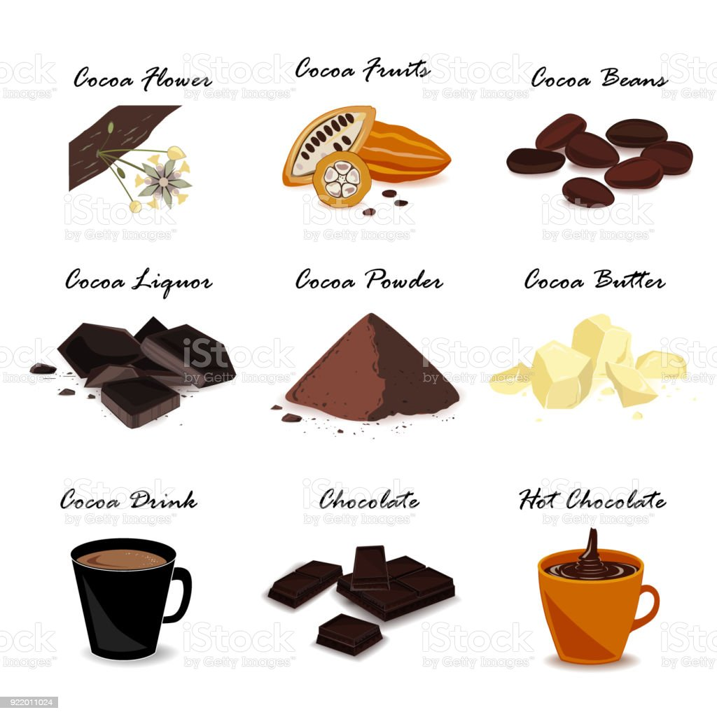 Super Food With Cocoa Pod Beans Cocoa Butter Cocoa Liquor Chocolate Cocoa Drink And Powder Vector Set Stock Illustration - Download Image Now
