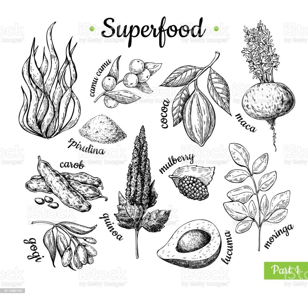 Mano de súper dibujado vector ilustración. Botánico ske aislado - ilustración de arte vectorial