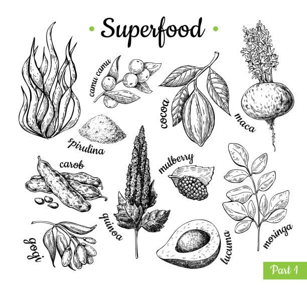illustrations, cliparts, dessins animés et icônes de main de superaliments dessinée illustration vectorielle. ske isolé botanique - antioxydant