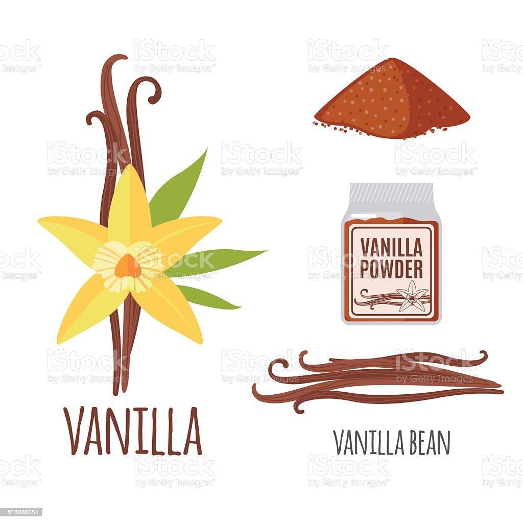 Superfood vanilla set in flat style. vector art illustration