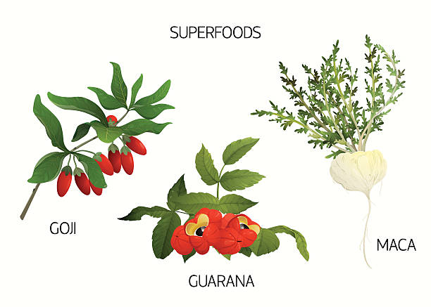 Superfoods set Set of 3 superfoods: guarana, goji and maca. EPS10 love potion stock illustrations