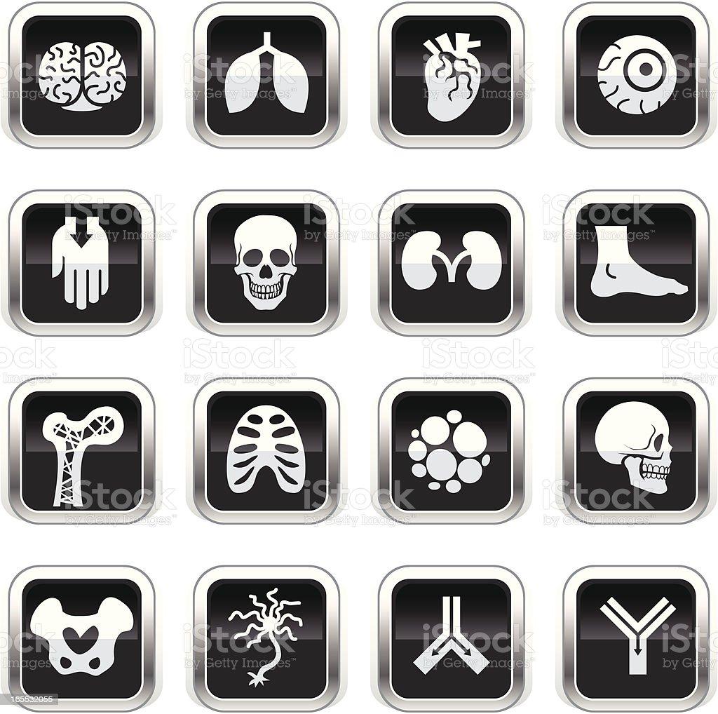 Supergloss Black Icons - Anatomy royalty-free stock vector art