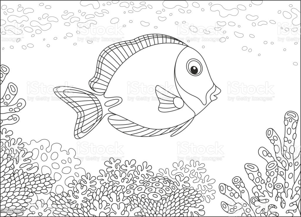 Surgeon fish on a coral reef vector art illustration