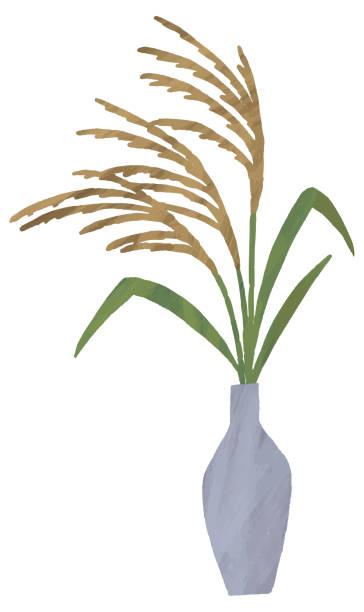 illustrazioni stock, clip art, cartoni animati e icone di tendenza di susuki grass illustration water paint - miscanthus sinensis