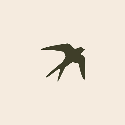 swallow bird abstract vector logo design template stock illustration download image now istock https www istockphoto com vector swallow bird abstract vector logo design template gm465412996 59439772