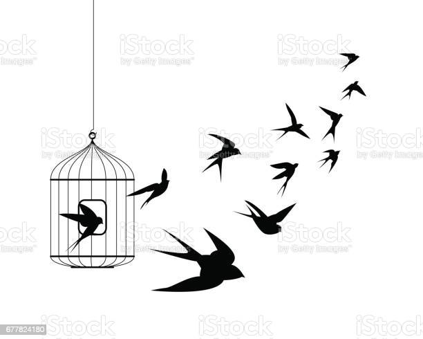Swallow birds flying out of cage vector id677824180?b=1&k=6&m=677824180&s=612x612&h=avgqcczfnkimb ait3nejfhhrzrkfmjydh47yri8xrm=
