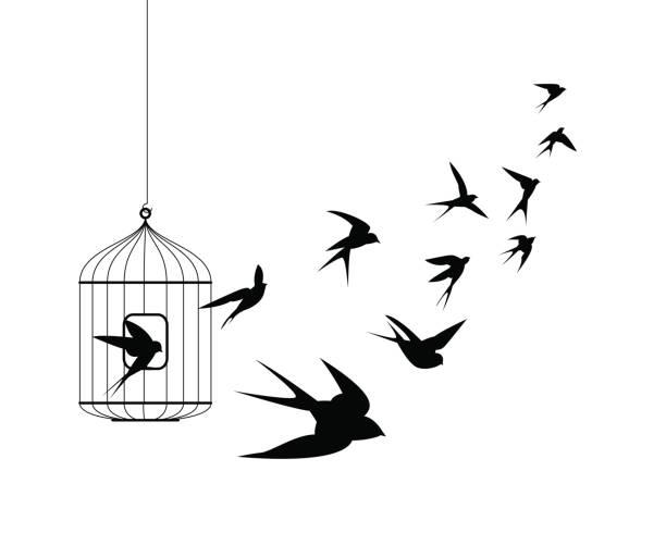 stockillustraties, clipart, cartoons en iconen met slikken vogels vliegen uit kooi - kooi