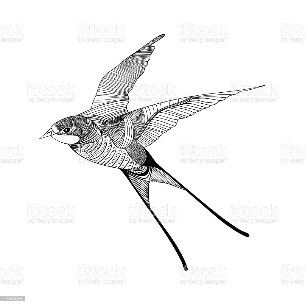 Swallow. Hand Drawn vector illustration.