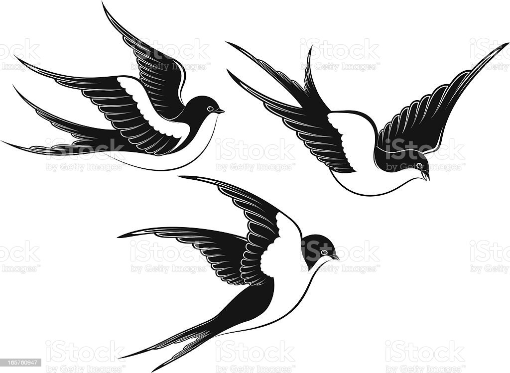 Swallow Stock Vector Art & More Images Of Animal 165760947