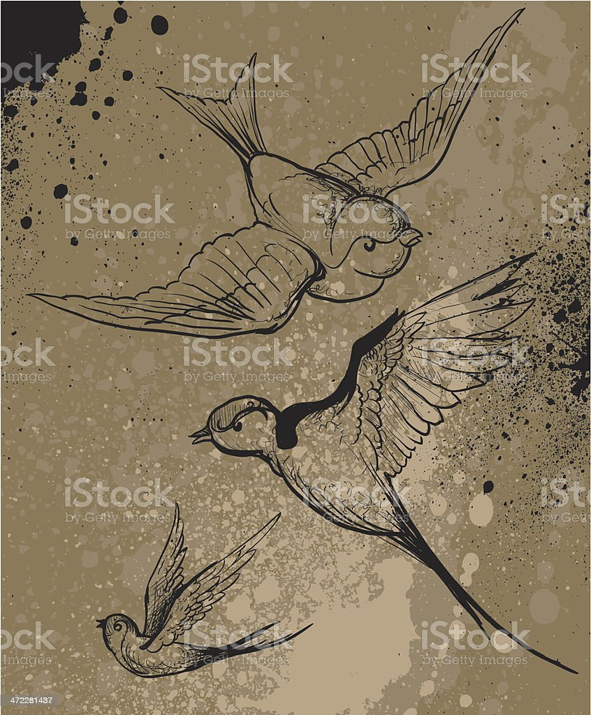Swallow royalty-free swallow stock vector art & more images of animal