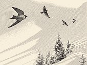 Engraving-style illustration of swallows and pine trees.
