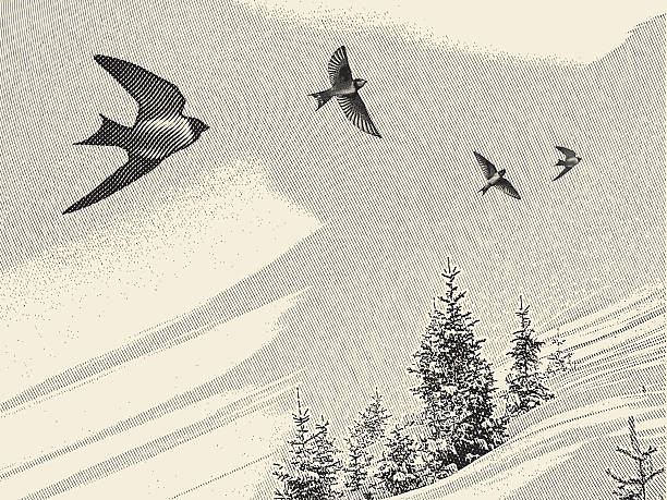 Swallows and Pine Trees Engraving-style illustration of swallows and pine trees. animal limb stock illustrations