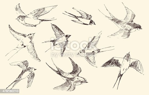 istock Swallows Flying Bird Vector, Hand Drawn, Sketch 476380210