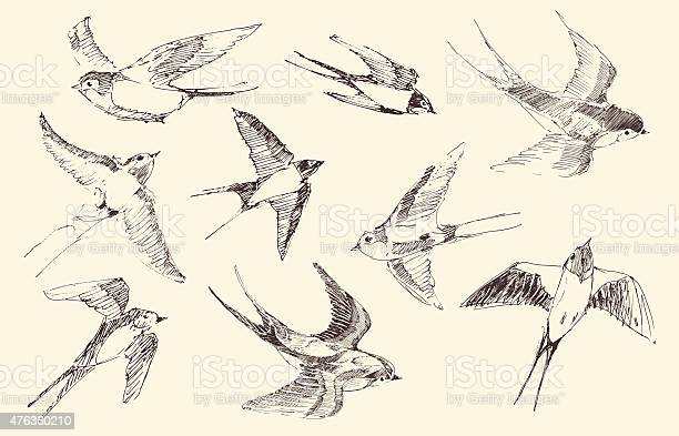 Swallows flying bird vector hand drawn sketch vector id476380210?b=1&k=6&m=476380210&s=612x612&h=fihdxosatf5jv93xa9vra9yxr8fucthpoc6esql81gg=