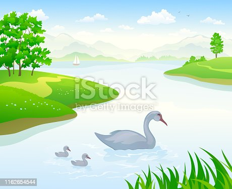 Vector cartoon illustration of a beautiful lake landscape with floating swans