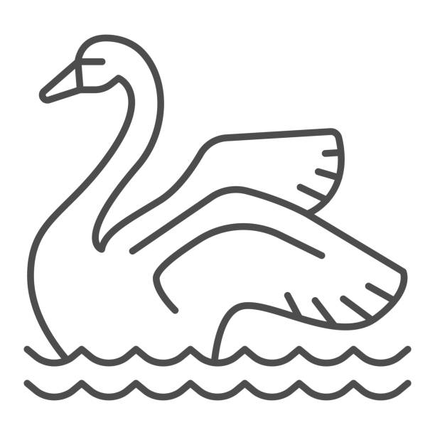 Swan on the water thin line icon, Amusement park concept, park elegant waterbird sign on white background, Swan icon in outline style for mobile concept and web design. Vector graphics. Swan on the water thin line icon, Amusement park concept, park elegant waterbird sign on white background, Swan icon in outline style for mobile concept and web design. Vector graphics water bird stock illustrations