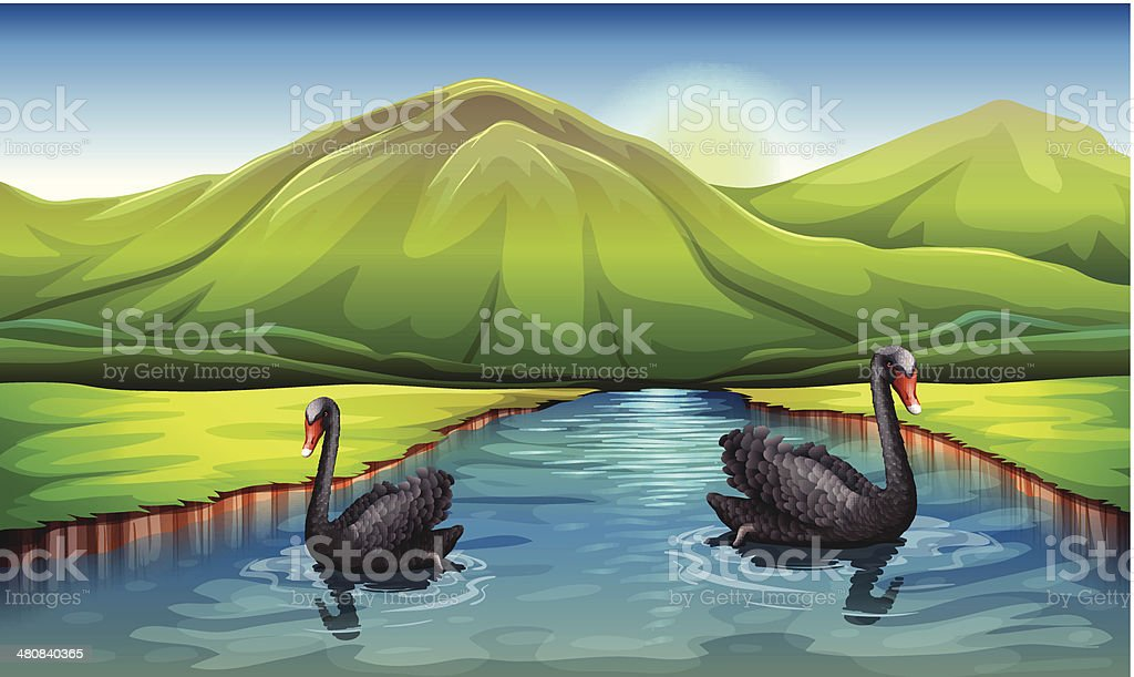 Swans in the river royalty-free swans in the river stock vector art & more images of animal