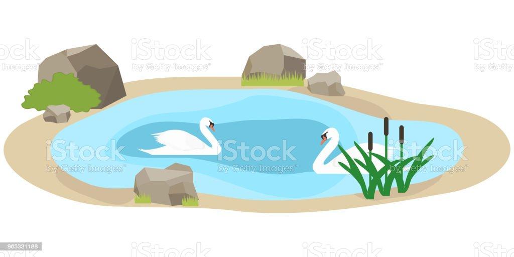 백조 호수에서 수영. 두 백조는 물에서 수영. - 로열티 프리 12-13세 벡터 아트