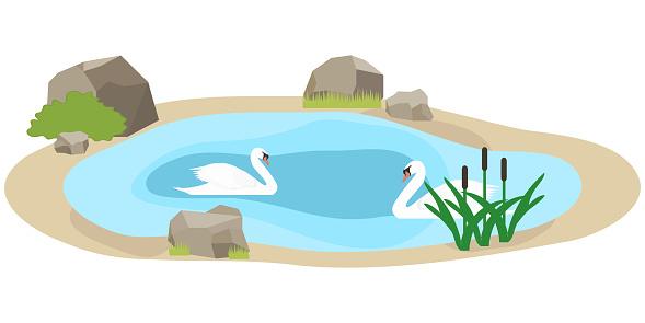 백조 호수에서 수영 두 백조는 물에서 수영 12-13세에 대한 스톡 벡터 아트 및 기타 이미지