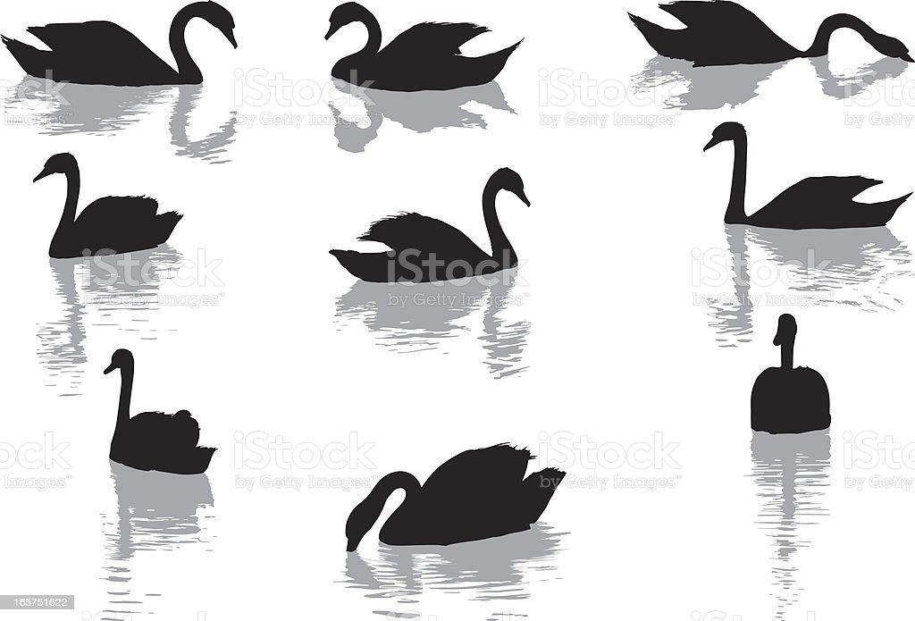 Swans vector art illustration