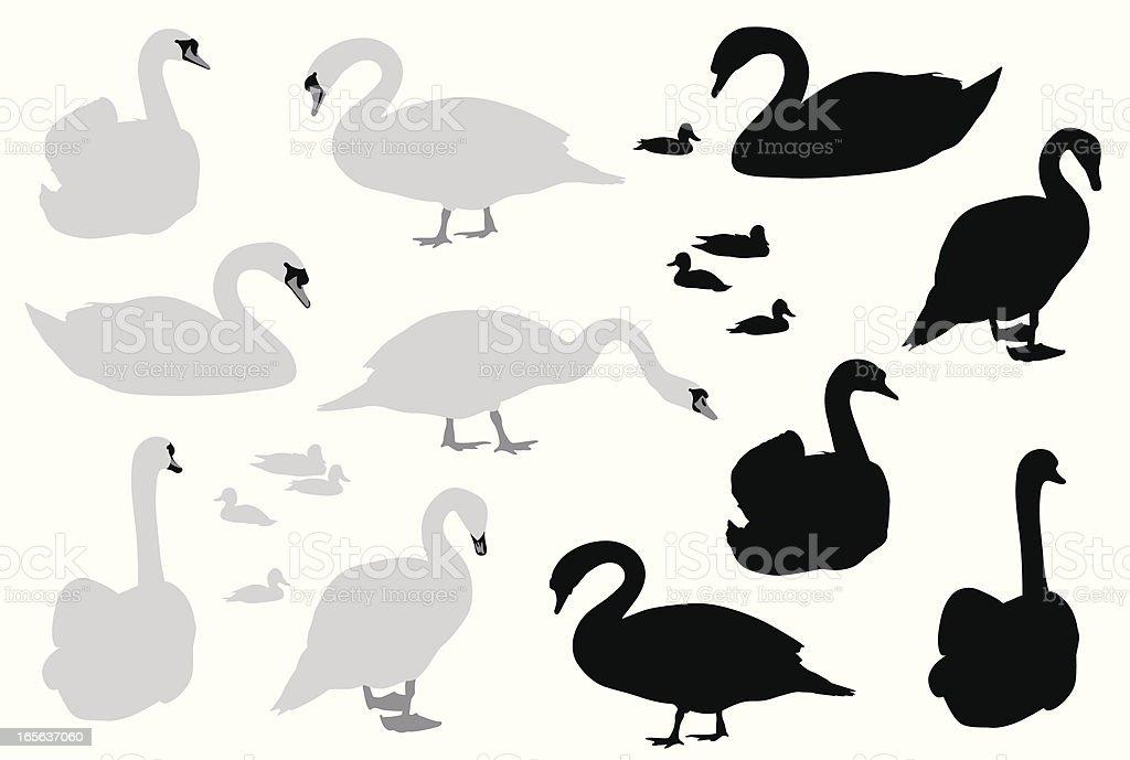 Swans Vector Silhouette vector art illustration
