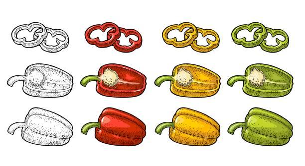 ilustrações de stock, clip art, desenhos animados e ícones de sweet bell pepper. vector vintage engraved illustration - red bell pepper isolated