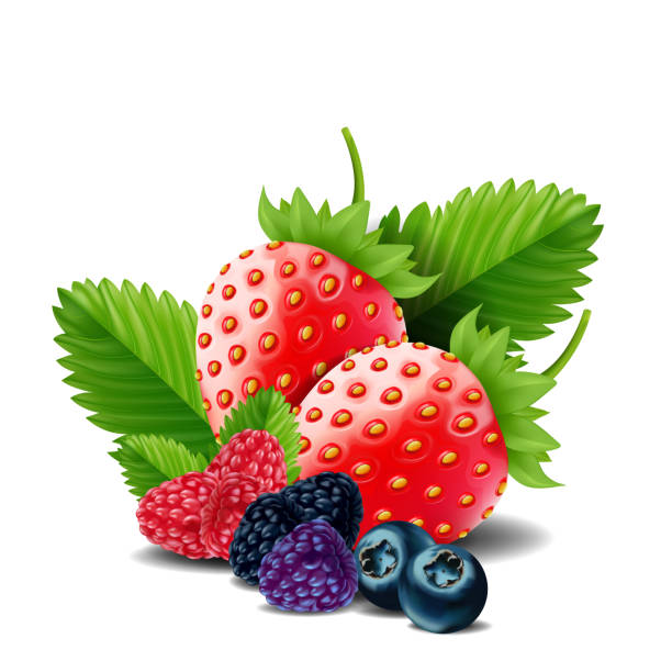 Sweet berries mix isolated on white background. Ripe raspberries, Strawberries and blueberries. vector illustration. vector art illustration
