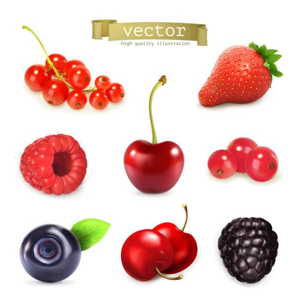 Sweet berries, vector illustration set of high quality Sweet berries, vector illustration set of high quality cherry stock illustrations