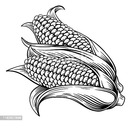 A sweet corn ear maize woodcut print or etching vintage style illustration